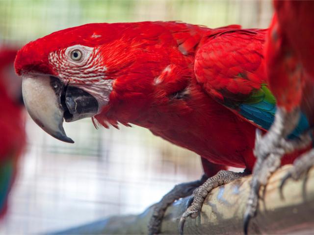 almunecar-parc-ornitologic-loro-sexi-1