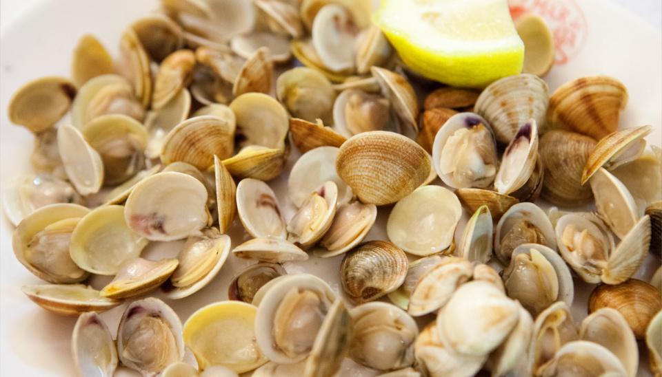 almejas-mar-de-plata