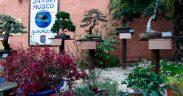 almunecar-nature-garden-museum-bonsai-1