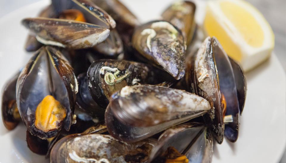 mejillones-mar-de-plata