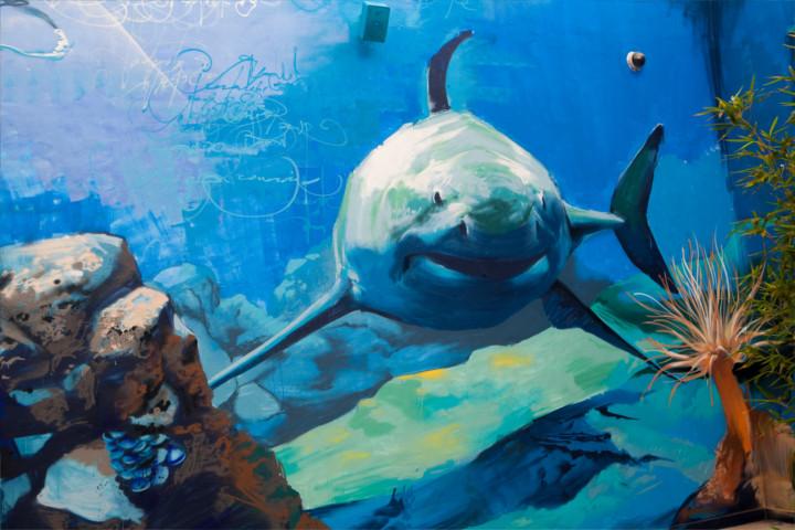 instalaciones-acuario-almuñecar-002
