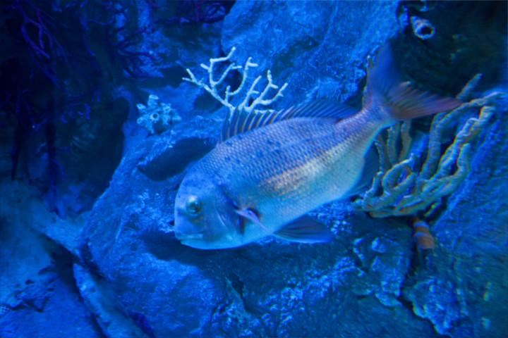peces-acuario-almuñecar-001
