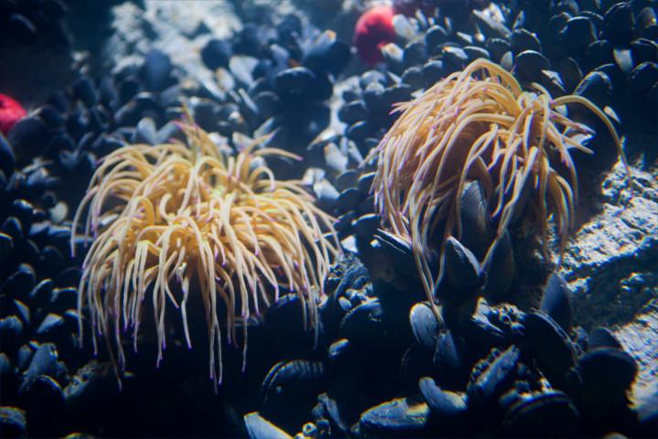 peces-acuario-almuñecar-003