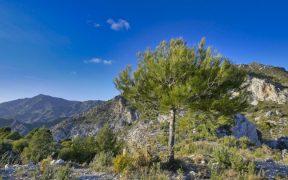 Sierra de Almijara portada